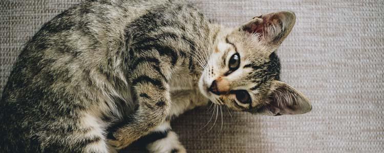 宠物寄养存在的问题 资质和协议不可或缺