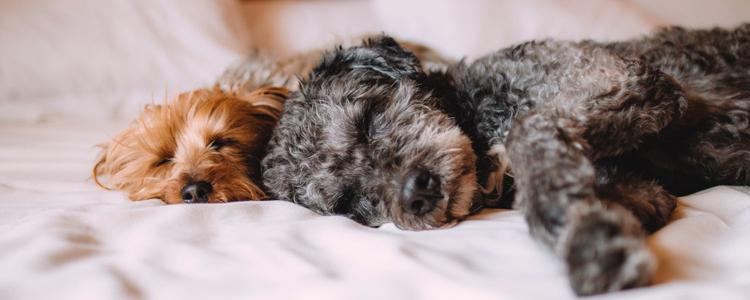 幼犬多少度觉得冷 如何帮助幼犬保暖
