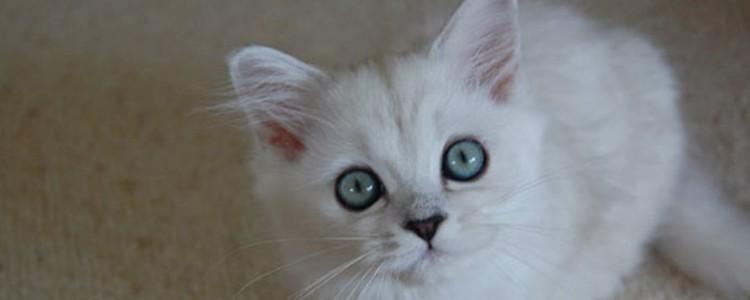 猫猫腹水后不拉屎了 是不是便秘才不拉屎的