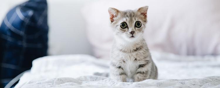 如何防止猫在床上拉屎 这三点很重要