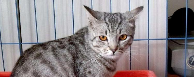 猫流黄脓眼屎还打喷嚏 感冒了就要赶紧治疗