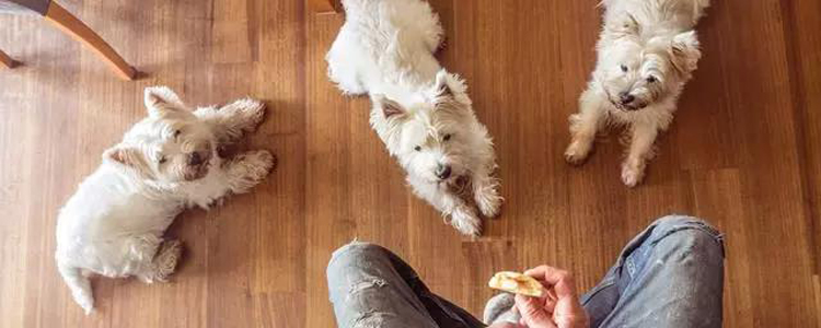 狗吃洋葱能自己恢复吗 如何帮助狗狗快速解毒