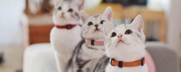 如何区分猫的性别 羞羞部位怎么看?