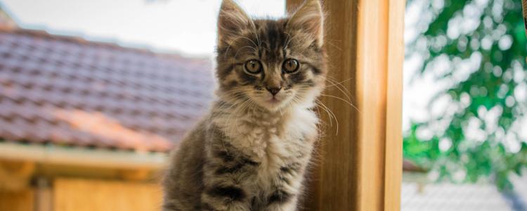 猫毛会对新生儿有影响吗 养猫对婴儿反而有优点?插图(1)