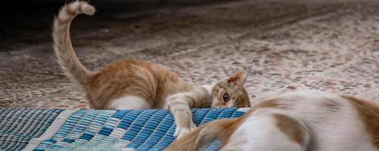 猫咪吐白色粘液还拉稀 可能是胃炎!