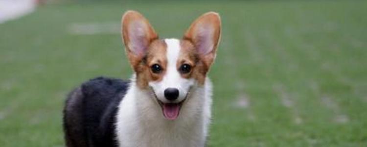 过年狗狗带不回去怎么办 可以选择寄养的方式最好了