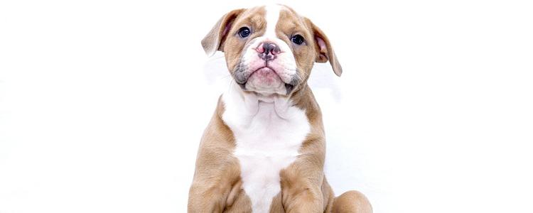 狗狗流眼泪是什么原因 狗狗没那么多愁善感