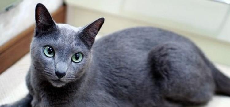 猫咪寄养需要注意什么 这些都是主人不能忽略的部分!