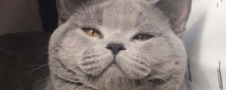 波斯猫的眼睛为什么有两种颜色 鸳鸯眼你知道吗?