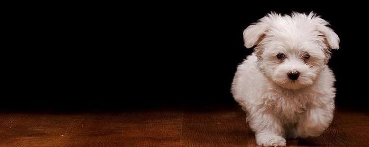 狗狗急性胰腺炎症状 胰腺炎可千万别耽误哦!