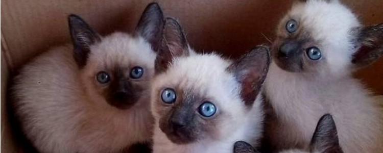 关于猫的一些冷知识 这些冷知识你都知道了吗
