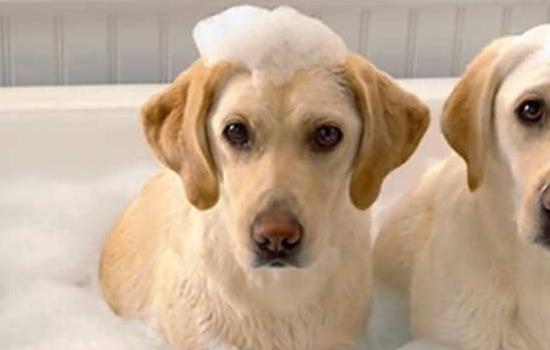 狗狗乳腺炎症状_狗狗乳腺炎症状 产后的狗狗多发哦!_小可爱宠物网