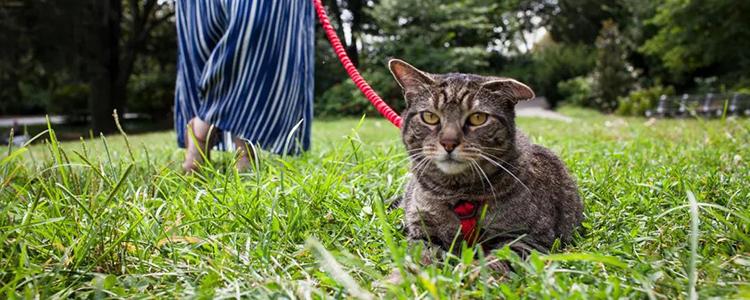 折耳猫能活多久 折耳猫寿命和是否纯合子有关吗