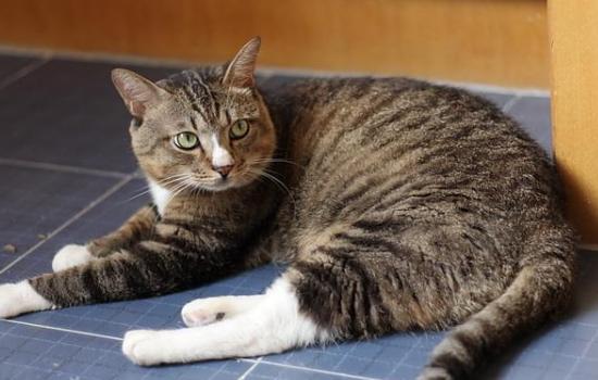 最适合老年人养的猫 这几种猫咪很适合陪伴!