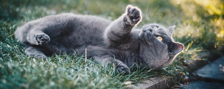 囧妈里的猫是什么品种 胖乎乎的小可爱谁不爱呢
