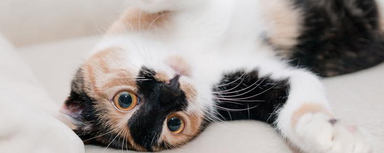 猫分什么品种 这个品种一定不要养