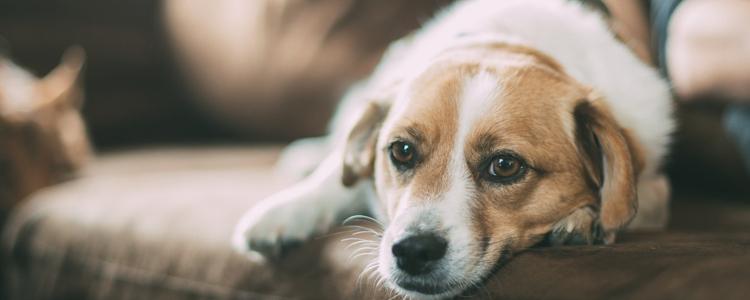 狗肾衰竭晚期怎么办 这些事情是主人力所能及的