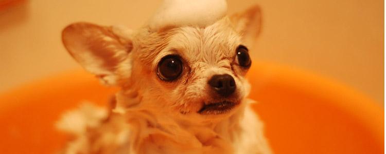 狗狗眼里有红色线虫一样的东西 是不是线虫?