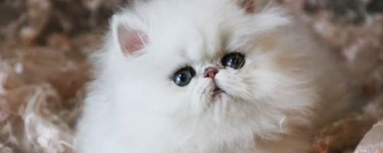 猫闻主人嘴是为什么 都是很暖的行为!