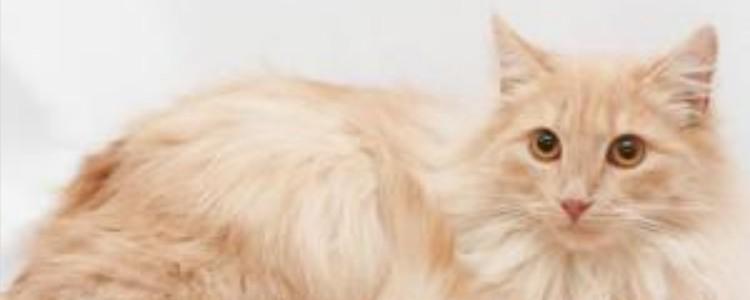 猫咪喜欢睡枕头原因 怕你压倒它,保证自己安全!