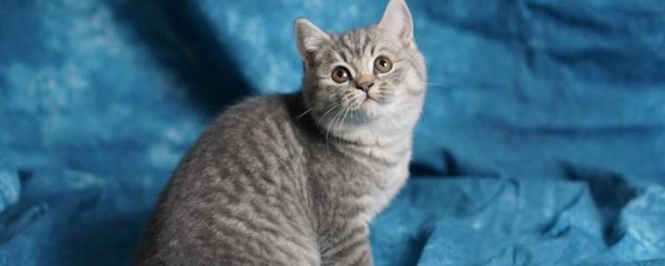 猫爬人肩膀预示着什么 肩膀上有足够的安全感!