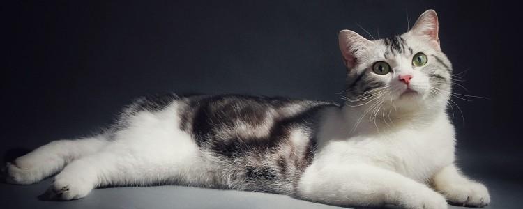 猫轻轻咬人是什么意思 对你表达我爱你!