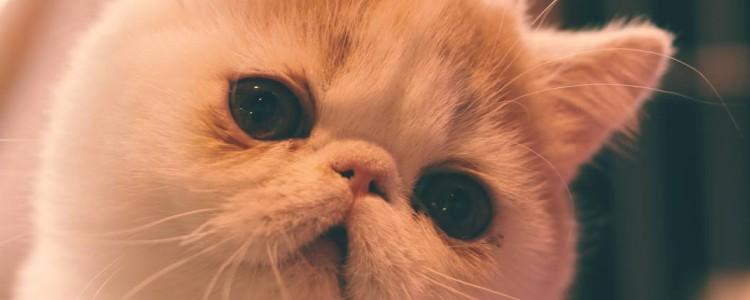 打了猫猫能记仇多久 思想真的非常简单了!