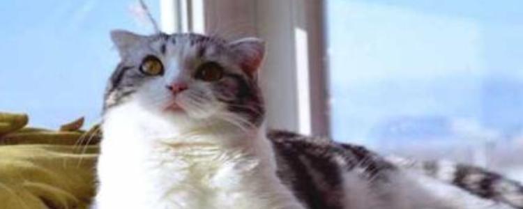 起司猫为什么不能养 这些缺点你都能接受吗?