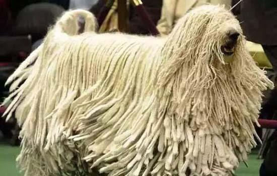 狗为什么要咬断自己的尾巴 狗狗自残是怎么回事