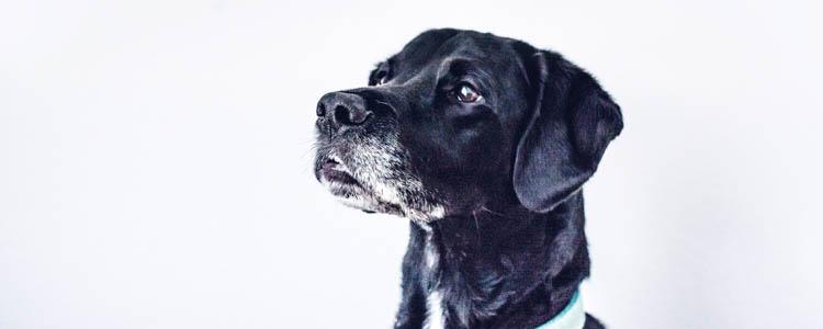 狗一直叫怎么制止 狗狗噤声训练可有效解决