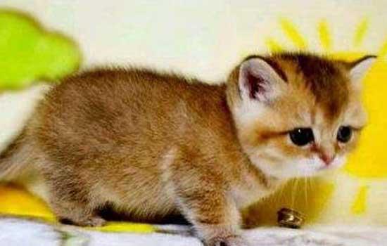 小猫为什么喜欢弓着背 小猫为什么老是弓着背