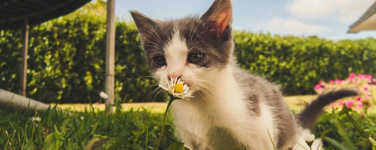 公猫绝育的坏处