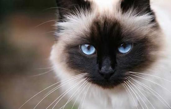 成年猫为什么还会一直有踩奶的行为 缺乏安全感