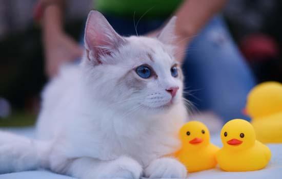 猫为什么会踩奶吃衣服 猫猫为什么咬衣服踩奶