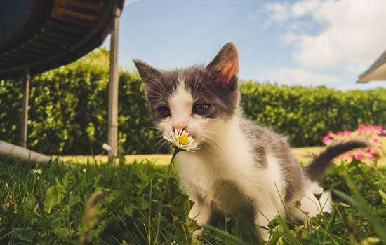 我的猫猫为什么不给我踩奶 有的猫为什么不会踩奶