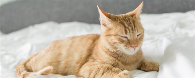 成年猫多久打一次疫苗 猫咪全阶段疫苗注射tip