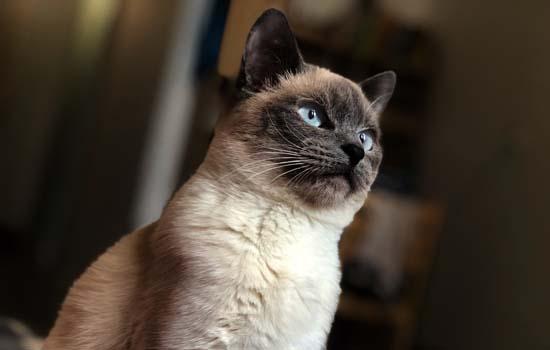 我家猫为什么只在我身上踩奶 猫和主人的缘分到了