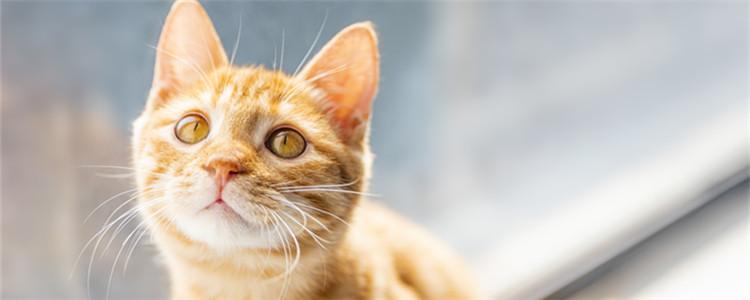 猫寄养一个月会忘记主人吗