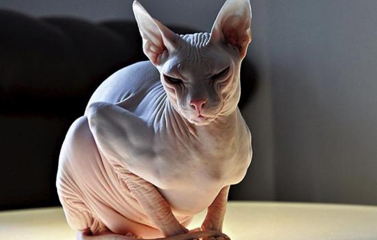 猫为什么和老虎长得那么像 小老虎和猫为什么很像
