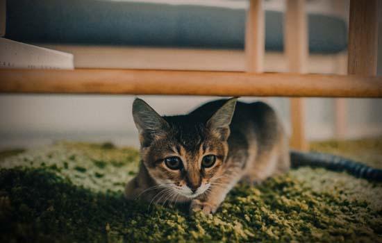 流浪猫为什么不吃饭 它可能饿得连路都走不动了