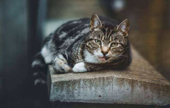 流浪猫为什么养不熟 捡猫也有讲究