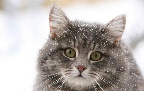 七八个月大的猫好养吗