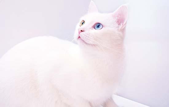 猫为什么会吐绿色的液体 胆汁与胃液的混合物