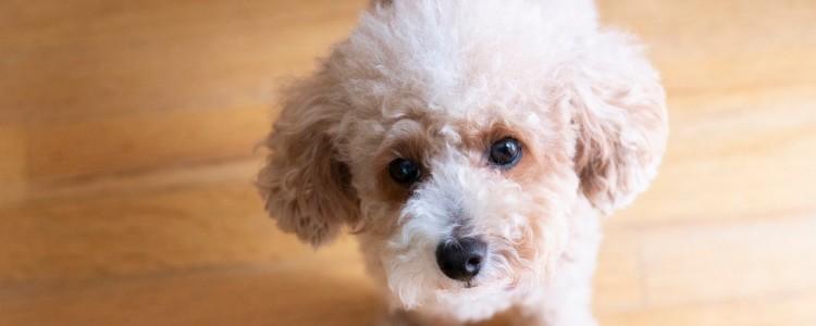 两三个月的小狗怕冷吗 幼犬怕冷吗