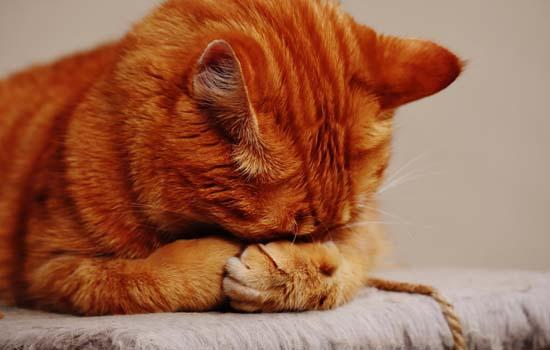 猫为什么踩奶时流口水 猫咪非常的享受