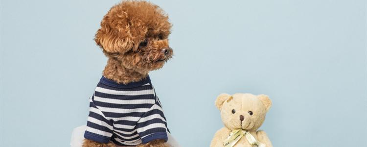 最适合有小孩养的狗 家有小孩养什么狗
