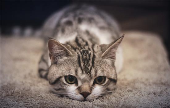 野猫为什么会跳到人身上 猫咪的天性要捕猎