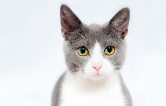 小猫为什么会喜欢去吃树叶 猫为什么要吃树叶