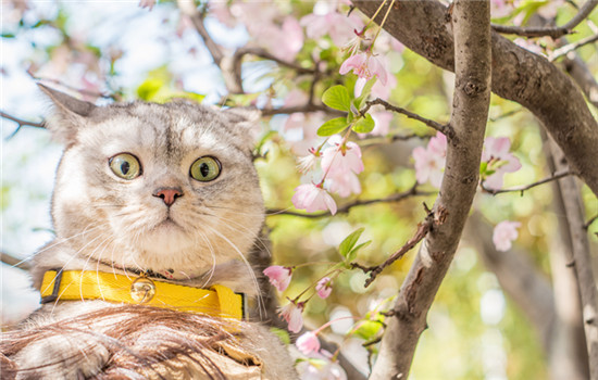 猫为什么一阵阵发抖 猫咪觉得太冷了