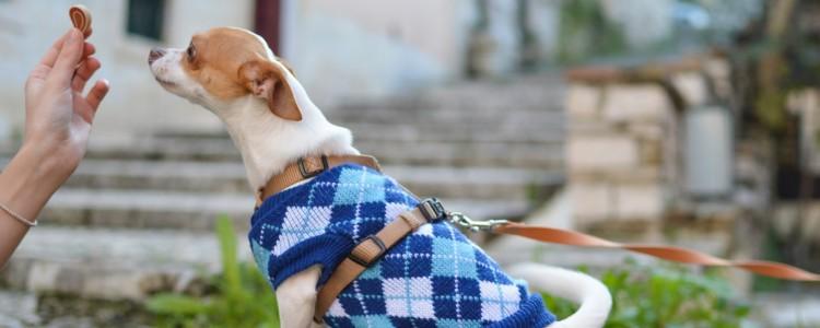 人感染狗狗的疾病症状是什么 狗狗疾病传染给人症状